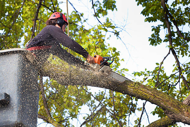 Man in bucket truck cutting a limb with a chainsaw