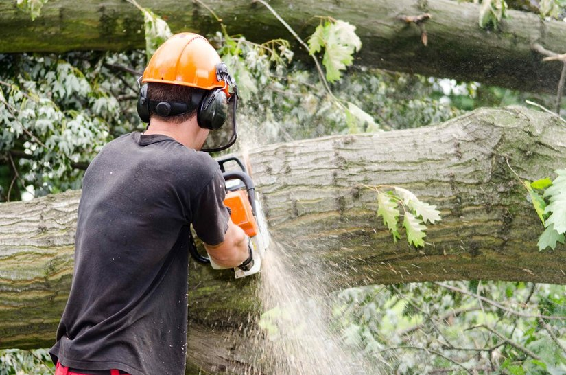 cutting a tree into pieces with a chainsaw