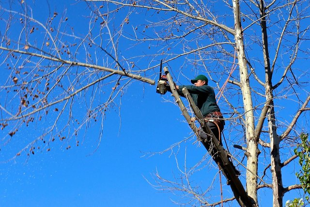man cutting a tree limb in tree with chainsaw