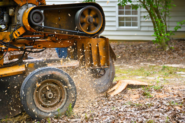 A Stump Grinding Machine Removing a Stump from Cut Down Tree