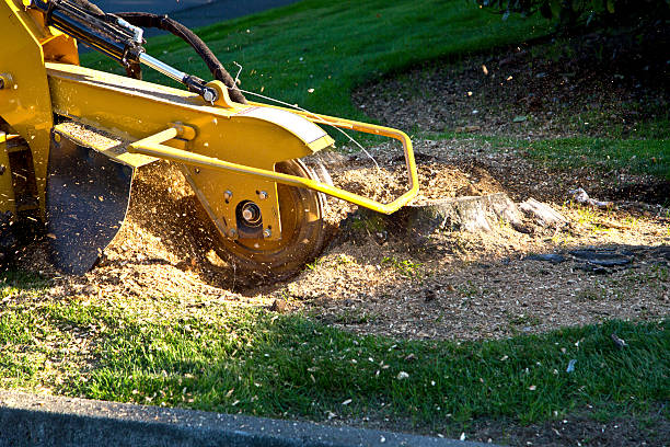 Grinding Tree Stump with Grinder.