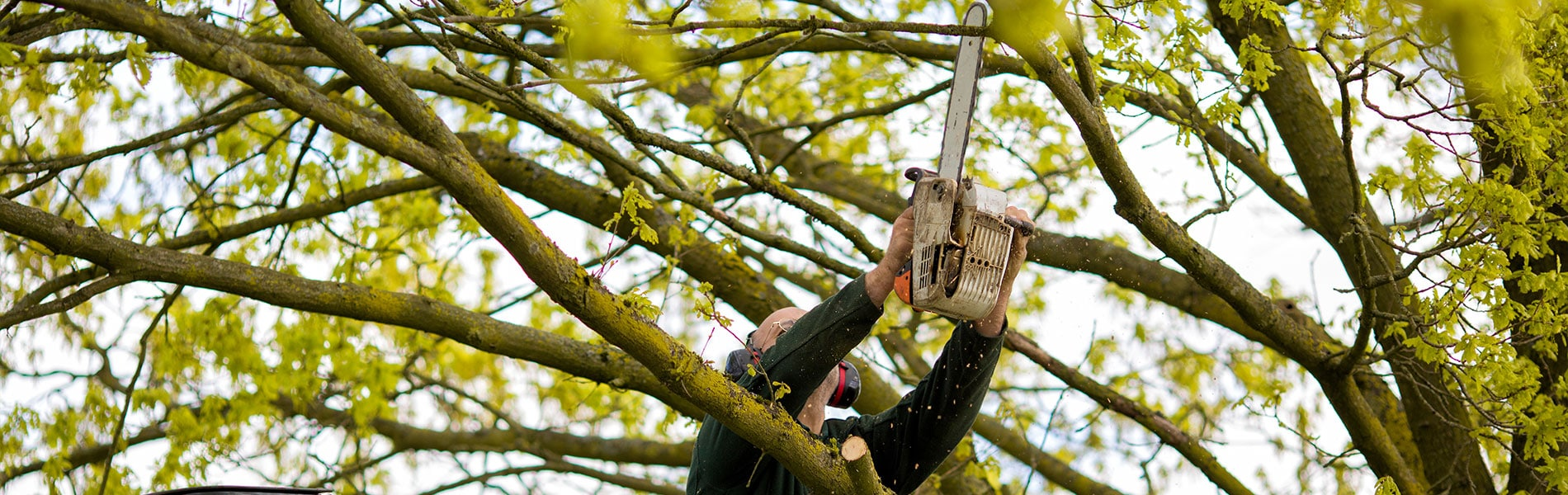 man reaching with a chainsaw to cut a branch on a tree