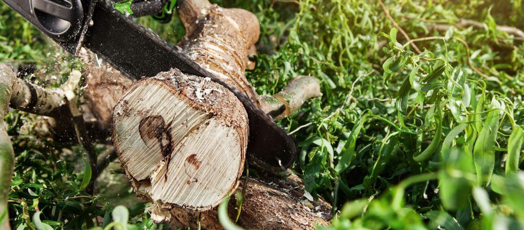 chain saw cutting through tree