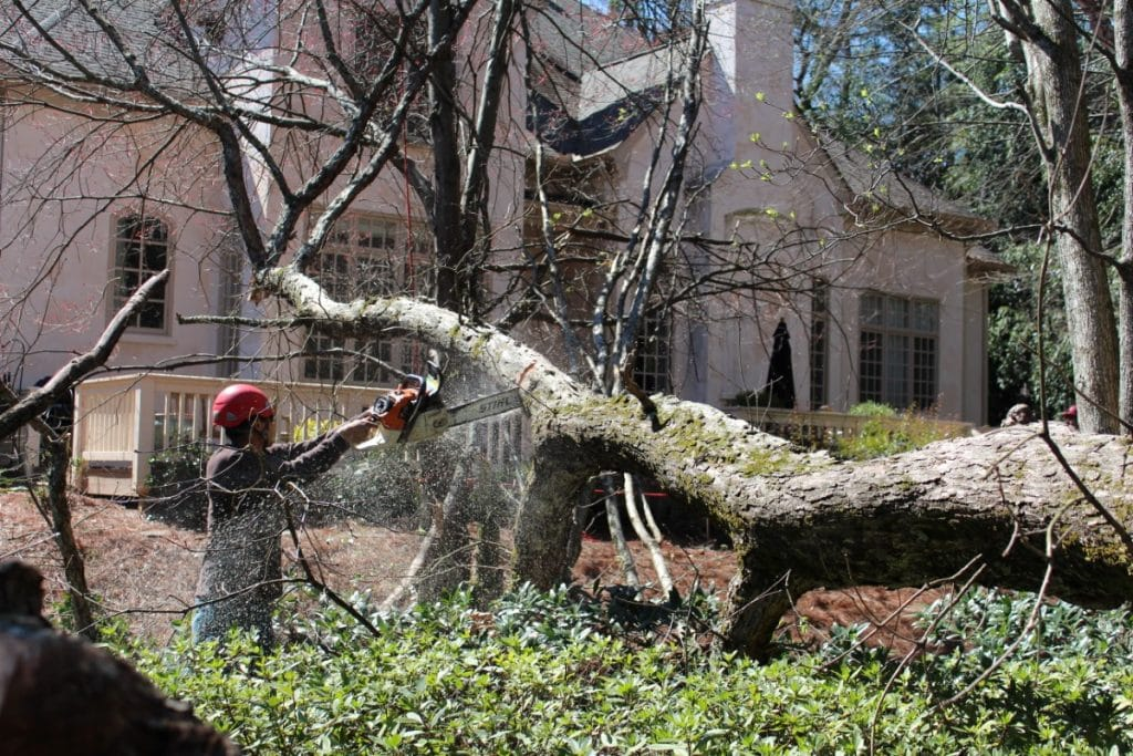 fallen tree being cut up by a man with chainsaw