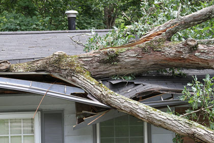 fallen tree laying on top of a house
