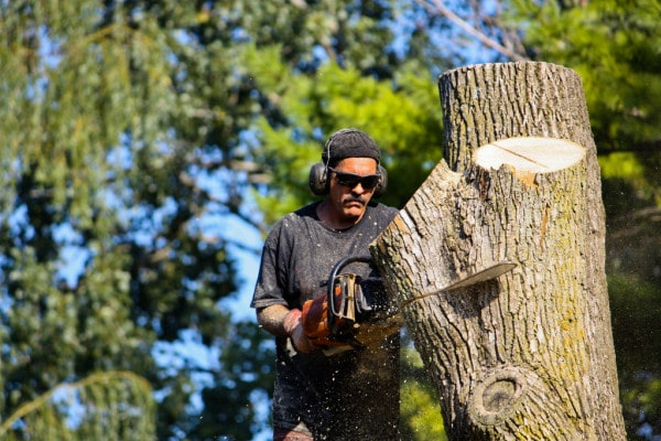 man cutting a tree with chainsaw
