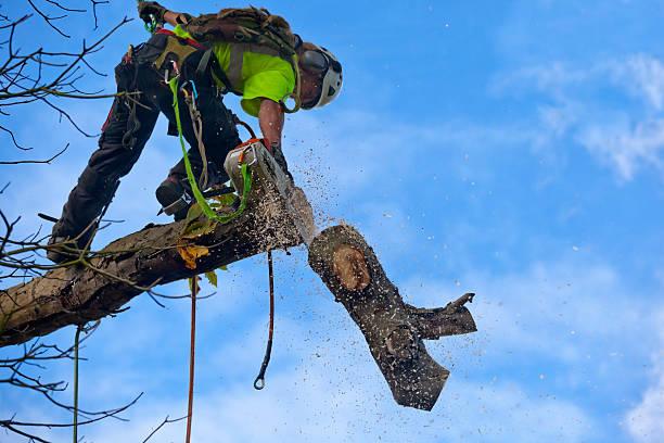 man cutting standing on a limb and cutting a tree limb