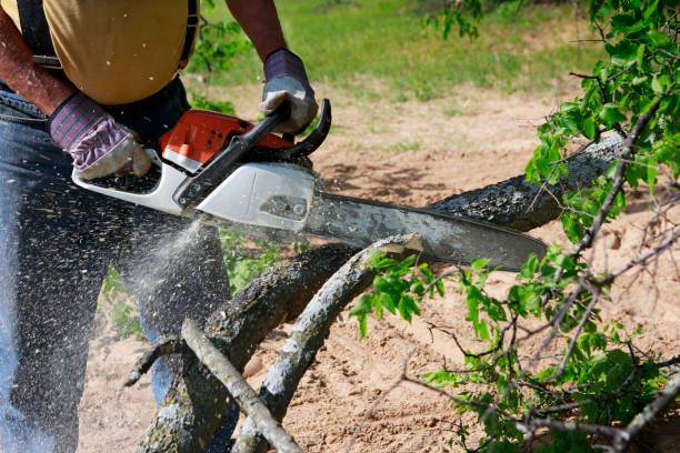 man cutting through tree limb with chainsaw