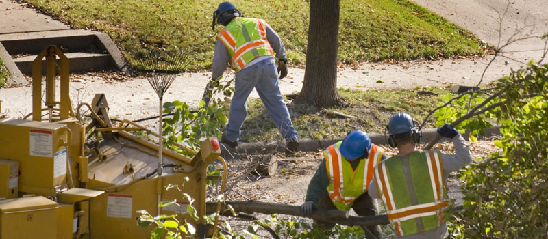 men cutting up branches that have fallen during a storm