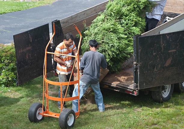 three men transplanting a tree