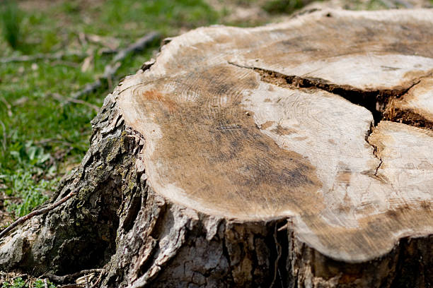 picture of a tree stump
