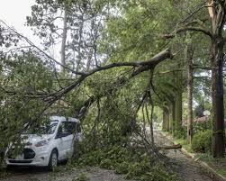 tree fallen on car (Emergency Tree Service)